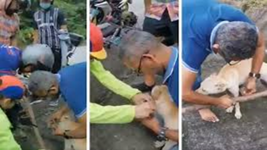 Malaysians Team Up to Rescue Dog on Karak Highway