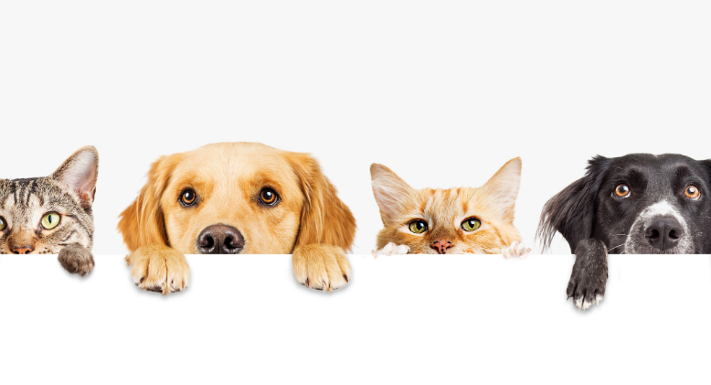 Pet Therapy: How Pets Help Push Through a Pandemic