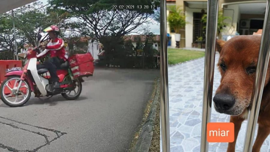 Pos Malaysia Takes Swift Action To Suspend Employee Who Allegedly Pelted Dog