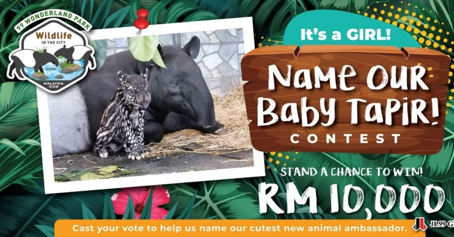 Name This Adorable Baby Tapir And Walk Away With RM10,000