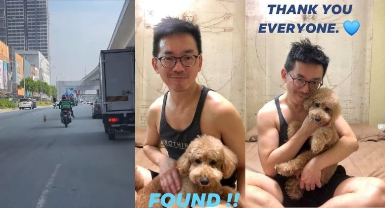 Malaysians Come Together to Rescue Poodle and Reunite it with its Owner