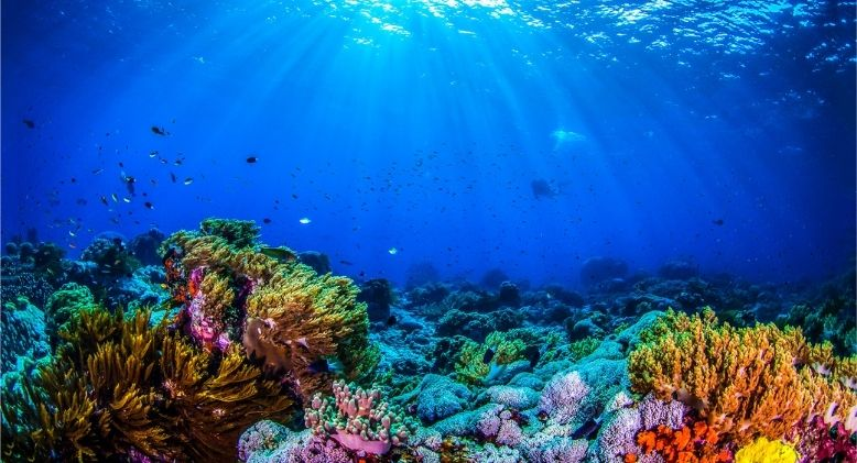 World Oceans Day 2021: Celebrating Our Largest Oxygen Supplier