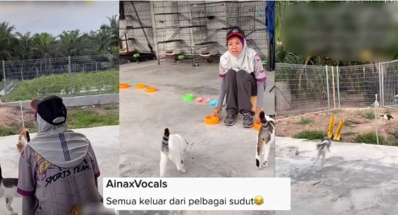 """Woman Calls Her Cat for Dinner, Cats Invites """"Friends"""""""
