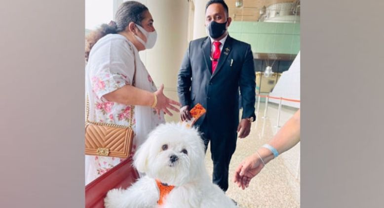 Woman in India Books Entire Business Class to Travel with Her Pet Dog
